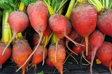 beets-944596 960 720